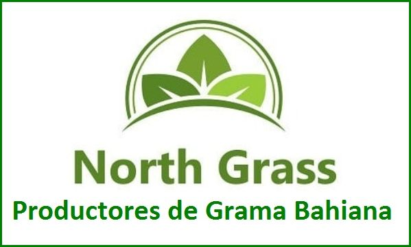 NORTH GRASS - Grama Bahiana