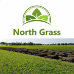 NORTH GRASS